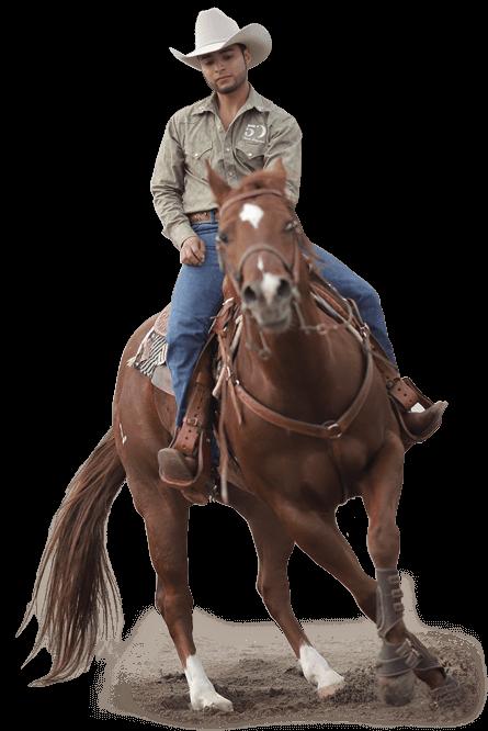 caballos cuarto de milla y pintos